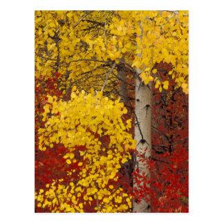 NA、米国、ワシントン州のWenatcheeの国有林 ポストカード