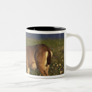 NA、米国、ワシントン州、オリンピックNPのラバシカの雌ジカ ツートーンマグカップ