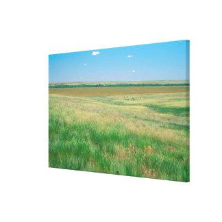 NA、米国、NE。 牧草地はOgallalaにとの近づきます キャンバスプリント