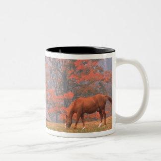 NA、米国、PAの谷の炉。 aで牧草を食べている馬 ツートーンマグカップ
