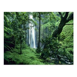 Na Paliの海岸、カウアイ島に沿うHanakapiaiの滝、 ポストカード