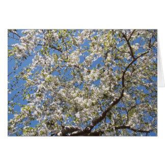 Nantucketの庭 カード
