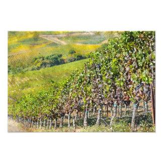 Napa Valleyカリフォルニアのブドウ園 フォトプリント
