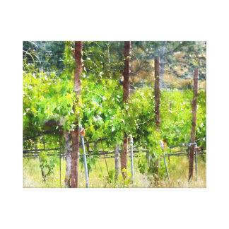 Napa Valleyカリフォルニアの春のブドウつる植物 キャンバスプリント