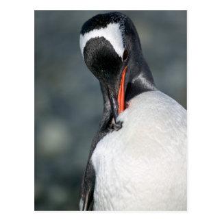 Neko港南極大陸のGentooのペンギン ポストカード