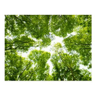New green leaves ポストカード