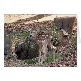 Newborn Fawn Thank You Note Card カード