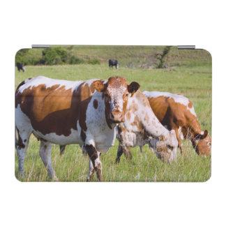 Nguniの牛、Badplaasの近くのDawsonsロッジ、 iPad Miniカバー