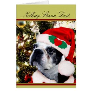 Nollaigのshonaのduitのクリスマスのボストンテリア カード