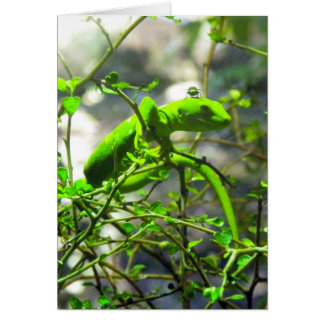 Northlandの緑のヤモリ カード