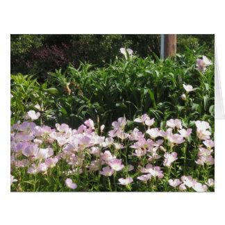 nvn718さくらんぼの丘NJ米国の野生の春の開花の白 カード