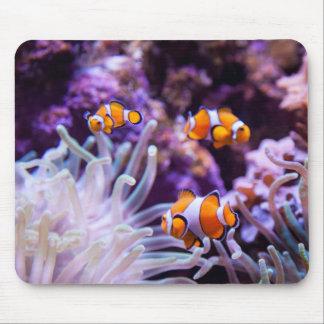 Ocellaris Clownfish |のAmphiprion Ocellaris マウスパッド