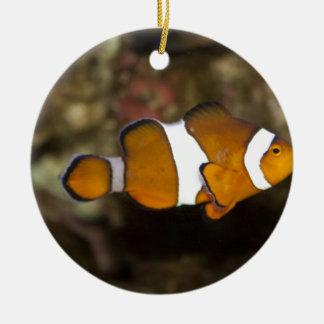 Ocellaris Clownfish セラミックオーナメント