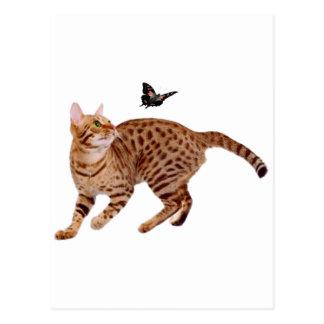 Ocicatの猫及び蝶 ポストカード