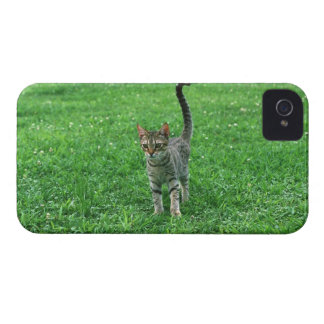 Ocicat 3 Case-Mate iPhone 4 ケース