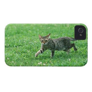 Ocicat Case-Mate iPhone 4 ケース