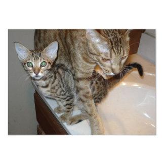 ocicat Tawny_kitten_with_cinnamon_mother カード