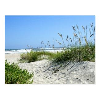 Ocracokeの海のオートムギ ポストカード