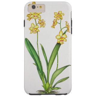 Odontoniaの蘭 Tough iPhone 6 Plus ケース