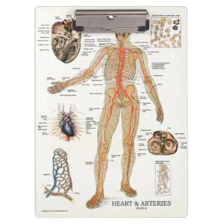 Office Heart Anatomy Clipboard博士 クリップボード