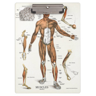 Office Muscle Anatomy Clipboard博士 クリップボード