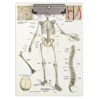 Office Skeleton Anatomy Clipboard博士 クリップボード