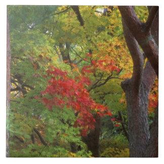 Okochi Sanso、Arashiyama、京都、日本5 タイル