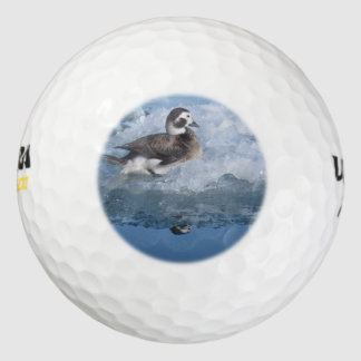 Oldsquawは長く海の氷のアヒルを後につきました ゴルフボール
