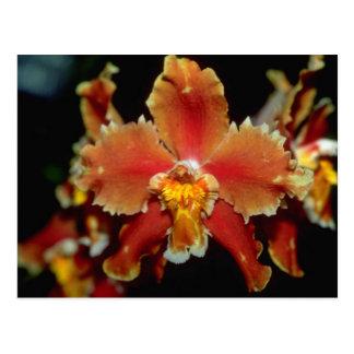 Oncidiumのオレンジ花 ポストカード