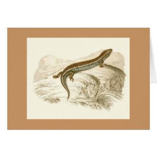 Orbigny - Skink - Gongylusの厚後につかれたoccelatus カード