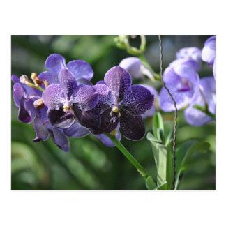 Orchidaeの紫色 ポストカード