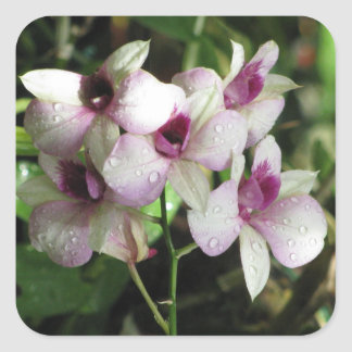 Orchideasのステッカー スクエアシール