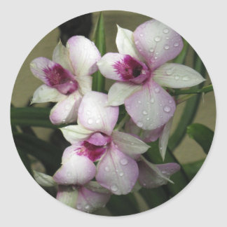 Orchideasのステッカー ラウンドシール