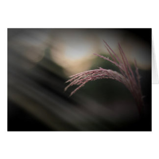 Ornamental Grass Note Cards カード