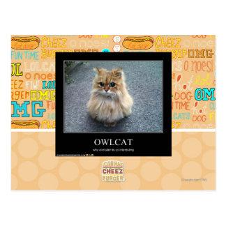 Owlcat ポストカード