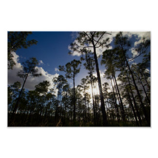 Oxbow Eco-center trees, Fort Pierce, Florida ポスター
