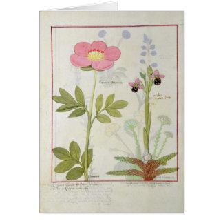 PaeoniaかシャクヤクおよびOrchisのmyanthos カード