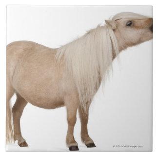 Palominoのシェトランド諸島子馬- Equusのcaballus (3年 タイル