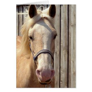 Palominoの子馬の挨拶状 カード