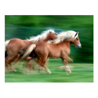 Palominoの馬の郵便はがきの競争 ポストカード