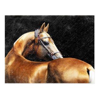 PalominoのAkhal-tekeの種馬 ポストカード