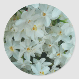 Paperwhiteのスイセンの敏感な白い花 ラウンドシール