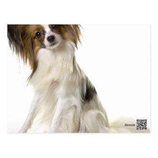 Papillonの子犬の疑問詞 ポストカード