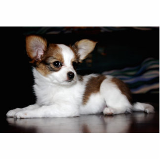 Papillonの子犬ピン 写真彫刻バッジ