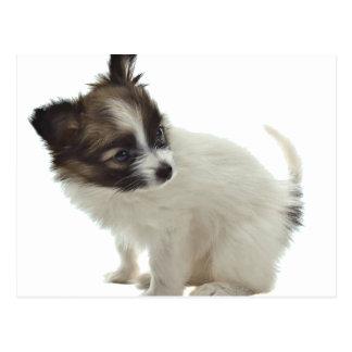 papillonの子犬 ポストカード