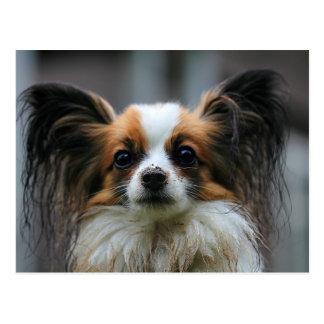 Papillonの小犬 ポストカード