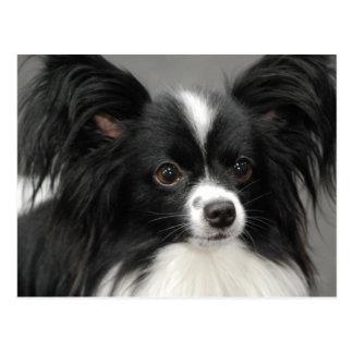 Papillon犬の郵便はがき ポストカード