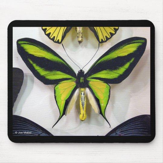 Paradise birdwing , Ornithoptera paradisea マウスパッド