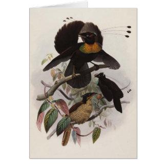 Parotiaのsexpennis - 6 shafted極楽鳥 カード