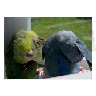 Parrotletの鳥のユーモラスな挨拶状の写真 グリーティングカード